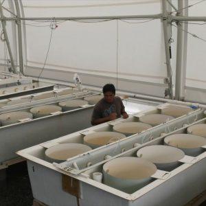 UH-Hilo Aquaculture Program Showcased
