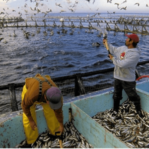 Minister Calls On Entrepreneurs To Invest In Aquaculture Production