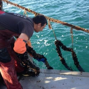 Sustainable Ocean Development
