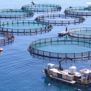The Future Of Fish Farming