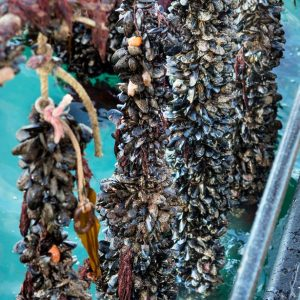 Meet The Shellfish Producer Who Breeds Enough Mussels And Lobsters To Feed Cornwall Three Times Over