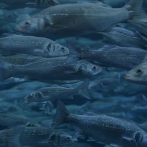 Hatch Aquaculture Accelerator Gets Funding From Aqua-Spark