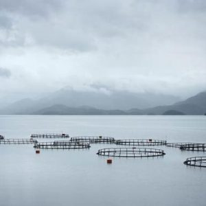 Kemin Industries Launches New Aquaculture Division