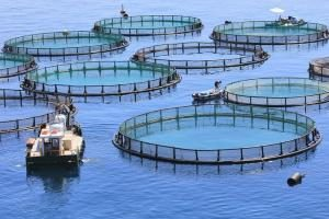 New UK-Canada Initiative Focuses On AMR In Livestock, Aquaculture