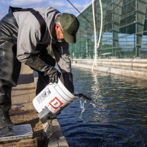 Aquaculture In Idaho