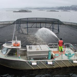 Macquarie Harbour Salmon: 1.35 Million Fish Deaths Prompt Call To 'empty' Waterway Of Farms