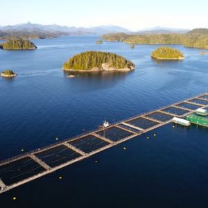 Salmon Study Findings Spur Calls For Fish-farm Regulation In British Columbia