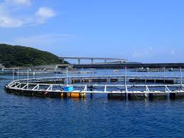 Japan To Allow More Firms To Enter Aquaculture Biz
