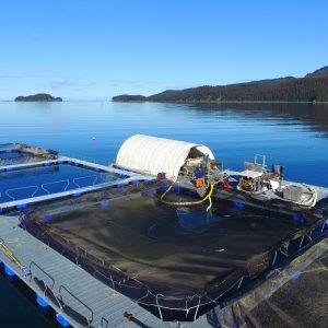 Cook Inlet Aquaculture Association Installs Tutka Bay Net Pens