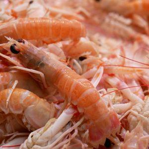 UAE's Only Shrimp Farm Casts A Wide Net