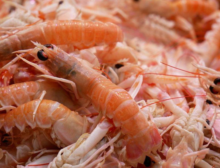 Shrimp 770×590