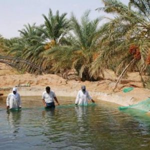 Aquaculture In The Sahara: A Mirage In The Desert?