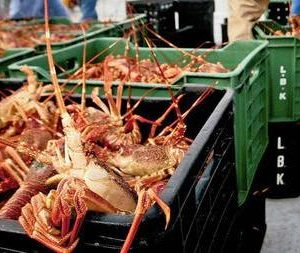 Acquaculture Crucial A Seafood Source, Job Creation