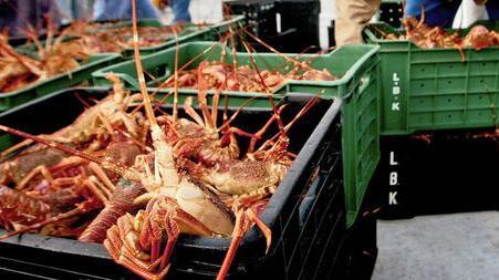 Acquaculture Crucial A Seafood Source, Job Creation