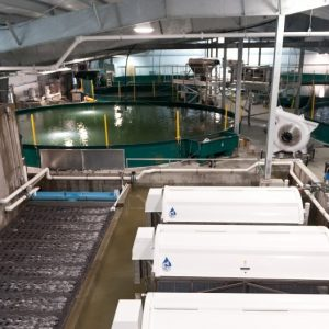 Land-based Fish Farming Lures New Investment Interest