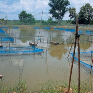 Theft Ruining The Hopes Of Aquaculture In Africa