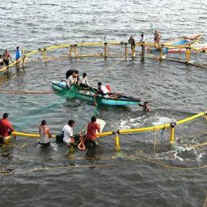 CMFRI To Promote Cage Fish Farming