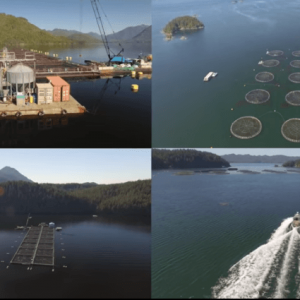 Fish Farming Will Play A Bigger Role In Feeding The World's Population