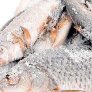 Major Fish Importers Embark On Backward Integration
