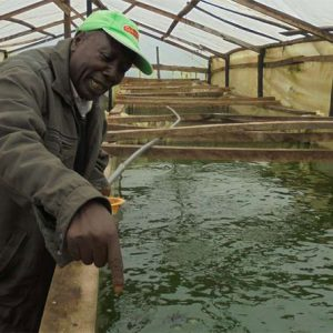 Fish Farmers In Africa Turn To Greenhouses For Better Returns