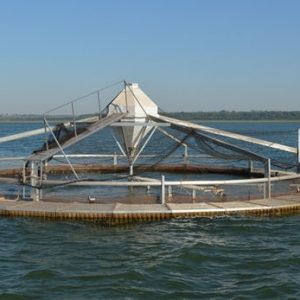 New Method Of Tilapia-farming Makes The Old Way Seem Square
