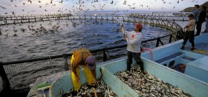 Aquaculture 300×141