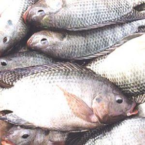 Zim Aquaculture Export Volumes Down 12pc