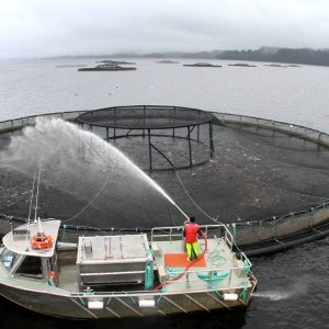Petuna And TasPorts Size Up Stanley As Base For Salmon Farming