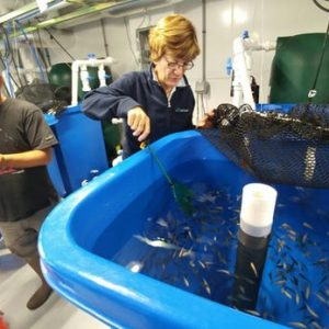 Algae-meal Fish Food Could Make Aquaculture More Eco-friendly