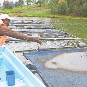 Kenya: Cage Fish Farming Now Lands In Nyeri