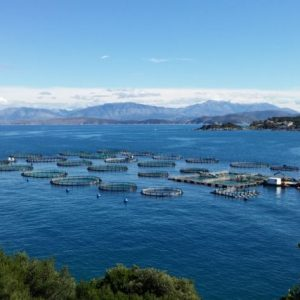 Real Life Farm Example On Display In Corfu