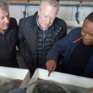 Hangana Abalone Promises Growth In Aquaculture