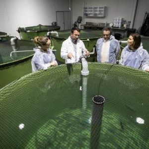 New Finfish Research Centre Will Provide A Boost For Aquaculture