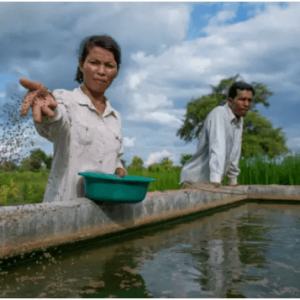 Where Are The Women In Aquaculture And Fisheries?