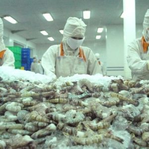 Intensive Processing Helps Vietnamese Shrimp Gain Competitive Edge