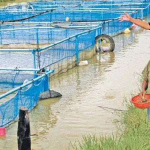 Sustainable Aquaculture Development