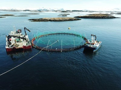 Marine Harvest Launches Brand Strategy And Changes Name To Mowi