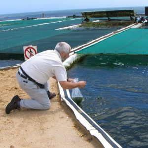 Aquaculture Key To Food Security And Nutrition?