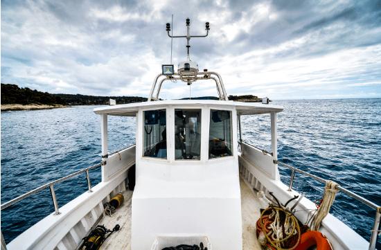 Lights, Camera, Action At Marine Harvest