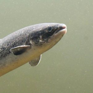 Appeal Made Regarding Placentia Bay Salmon Aquaculture Project