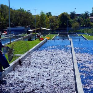 "Benefits Of Aquaculture Are Being ""overlooked"""