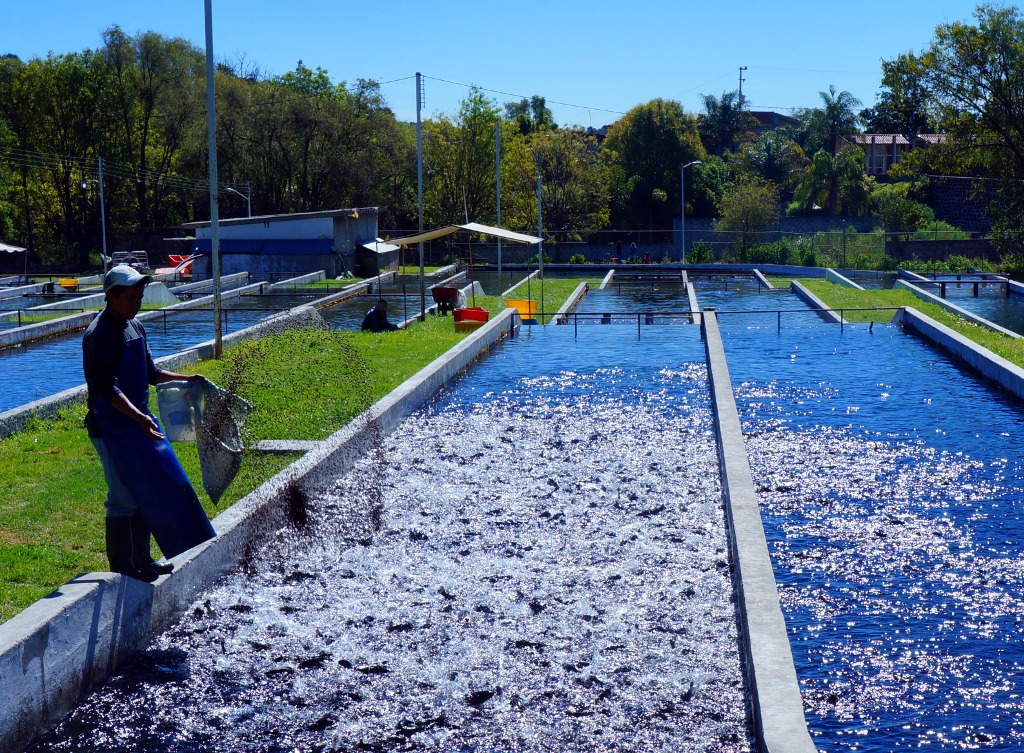 """Benefits Of Aquaculture Are Being """"overlooked"""""""
