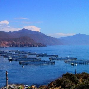 China Sets Sights On Offshore Aquaculture