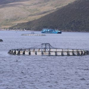 Scottish Fishery, Aquaculture Projects Receive GBP 4.8 Million EU Funding