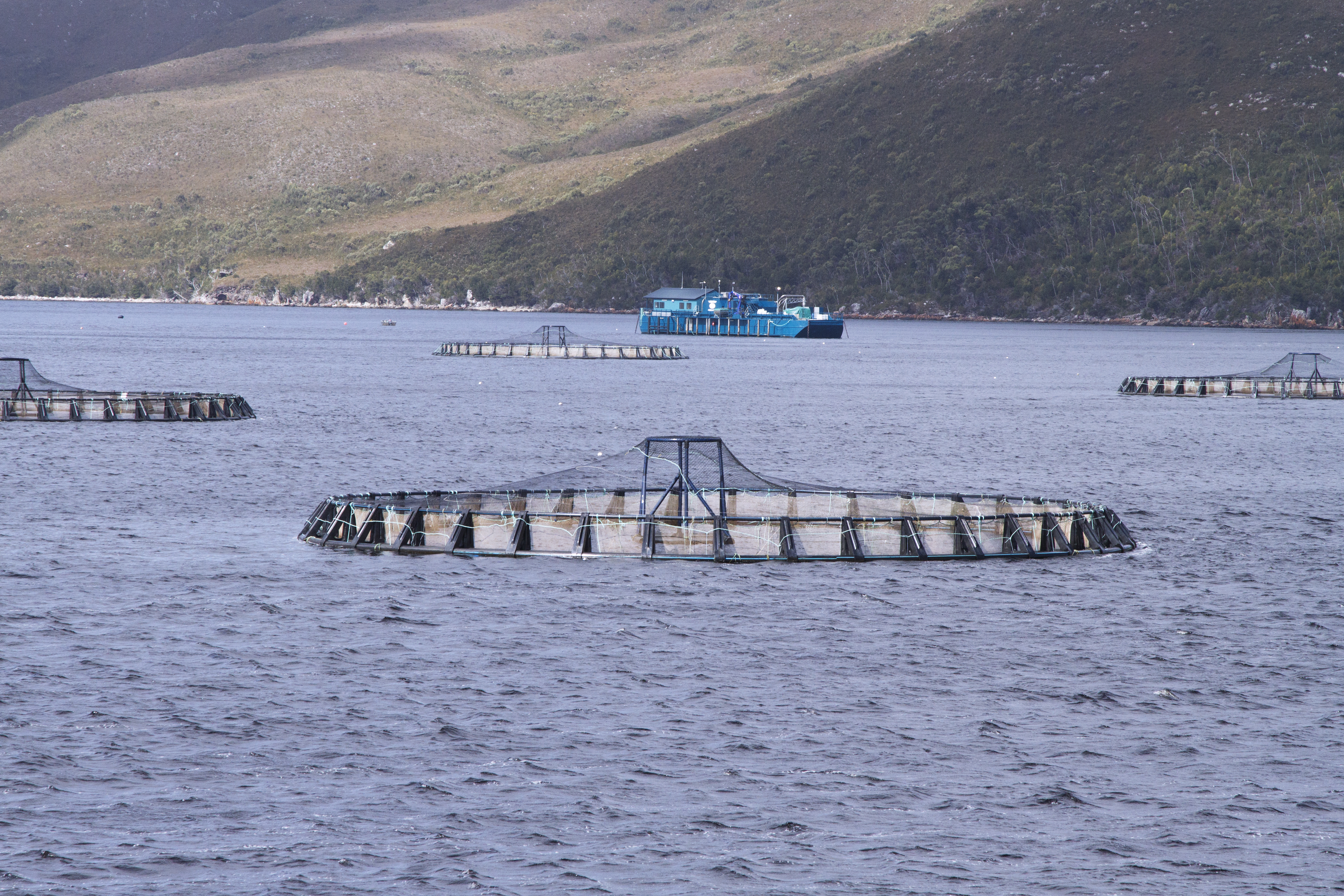 Growing And Farming Salmon In Macquarie Harbour, Tasmania.