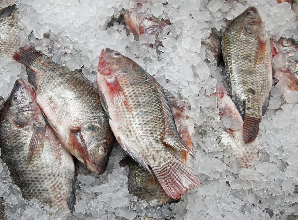 Intrexon and AquaBounty Receive Regulatory Exemption in Development of Gene Edited Tilapia for More Sustainable Production