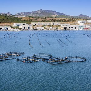 Report Shows EU Aquaculture 'fully Recovered' From 2013 Downturn