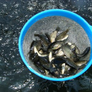 BFAR Pushes To Develop Aquaculture In Phillippines