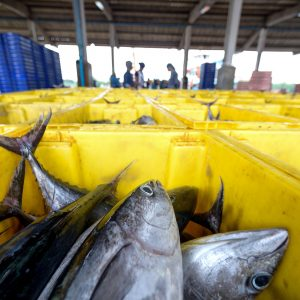 US Hails WTO Rulings In 'dolphin-safe' Tuna Tiff With Mexico