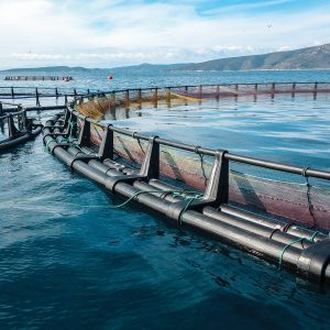 China To Trial Offshore Fish-wind Farms Integrated With Aquaculture